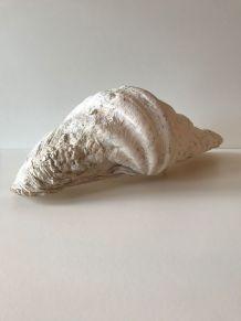 Grand et très ancien coquillage bénitier
