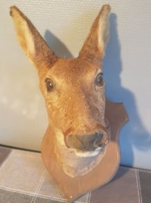 trophée de chasse tête de biche naturalisée 45 cm