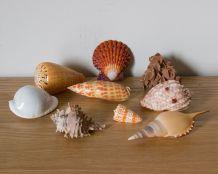 Petit cabinet de curiosités