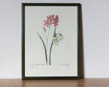 Planche de botanique