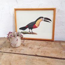 Cadre ornithologique toucan