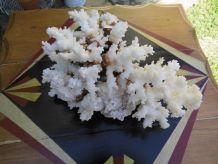 Bloc de corail