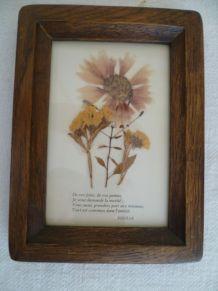 Cadre Fleurs séchées façon herbier vintage Bretagne