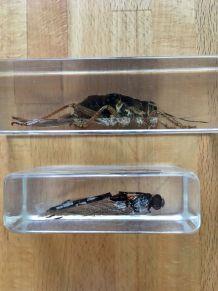 Presse papier insecte