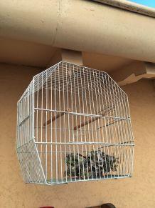 Cage à oiseaux ancienne en métal.