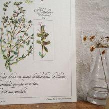 Planche botanique Tisane pour le sommeil des enfants