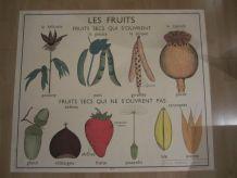 Affiche scolaire Rossignol