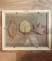 Herbier feuille d'automne