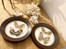 Lot de 2 cadres papillons naturalisés