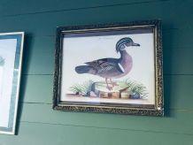 Lithographie canard ancienne encadrée