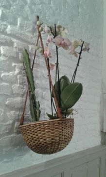 Suspension pour plantes en rotin