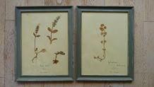 4 herbiers anciens encadrés
