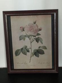 Cadre marqueterie avec reproduction Rosier blanc royal