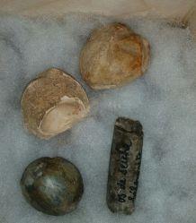 Lot de 4 fossiles marins (étoile, œuf tortue, gasteropodes)