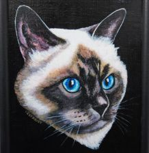Chat birman, chat de Birmanie, portrait de chat de Birmanie.