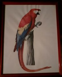 """lot 4  illustrations sous cadres  en couleurs """"Les oiseaux""""."""