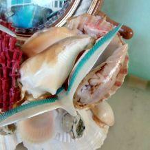 Souvenir de plage en coquillages.