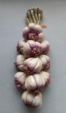 Tresse d'ail décorative