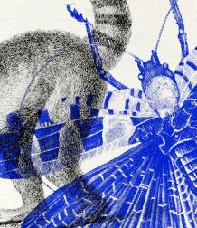 Gravure lithographie lémurien insectes animal