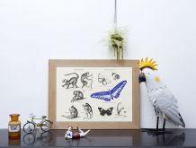 Gravure lithographie lémurien papillon insecte
