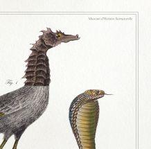 Chimère - gravure lithographie - le cariapocampe et le