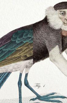 Chimère - gravure lithographie - le kamidouc et le parromich