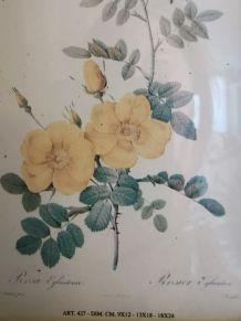 Ancien petit cadre illustration fleur
