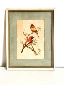 Lithographie ornithologique vintage