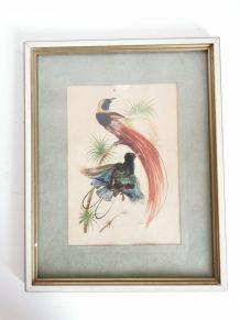 Jolie lithographie ornithologique vintage