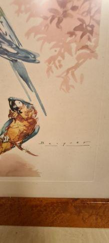 lithographie  oiseaux signé  1996 dans beau cadre en loupe 8