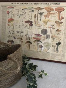"""Affiche botanique """"Les champignons comestibles et vénéneux"""""""