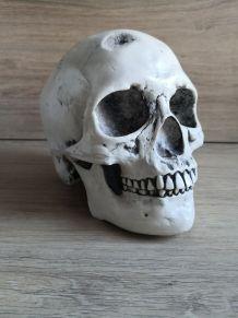 Crâne humain en céramique décoration médical