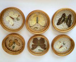 Dessous de verres papillons