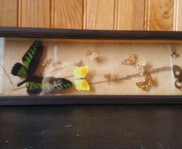 Cadre entomologique
