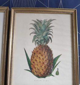 cadres lithographies fruits cadre doré