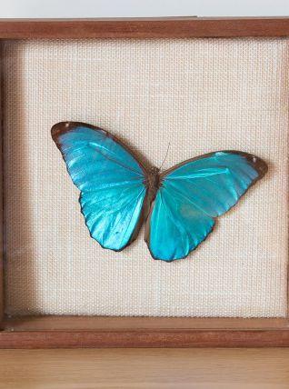 Cadre de papillon