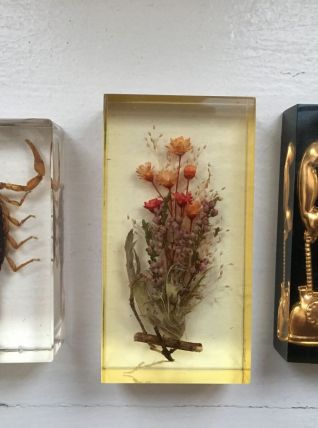 Inclusions insecte, cabinet de curiosite, scorpion