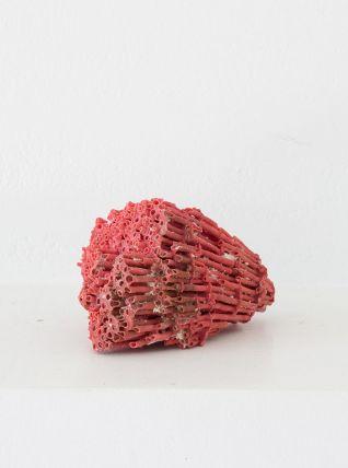 Corail rouge ancien