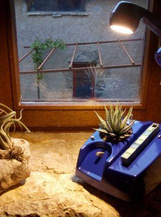 Lampe téléphone et plante verte
