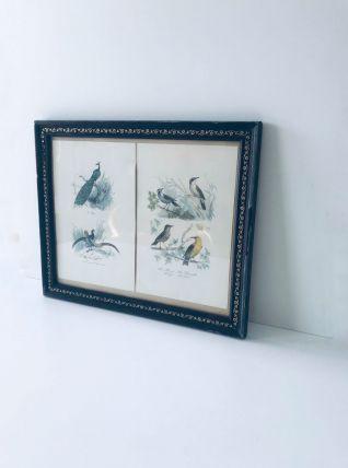 Lithographies encadrées oiseaux
