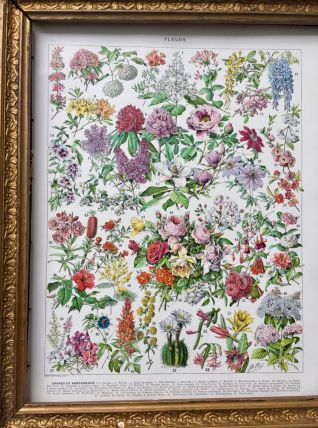 Illustration Millot Fleurs d'arbres