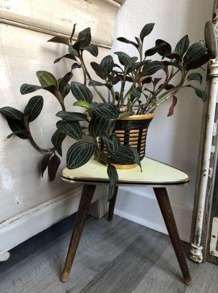 Porte plante  bois/formica tripode compa