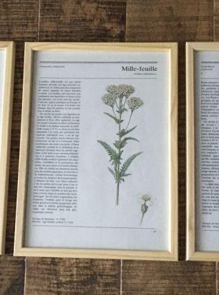 Lot 3 illustrations botaniques vintage encadrées
