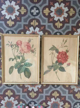 Deux planches botaniques années 50/60.