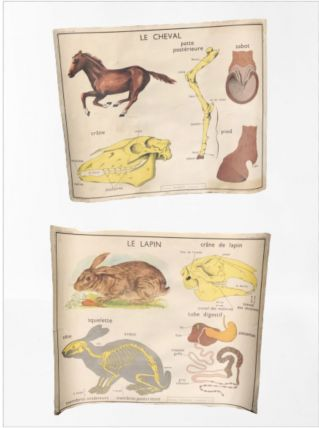 Ancienne affiche scolaire MDI le cheval / le lapin vintage