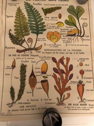 Affiche scolaire année 60