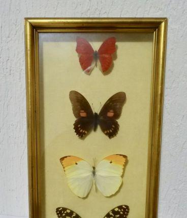 cadre papillons sous verre