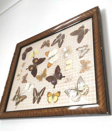 Papillons encadrés vintage