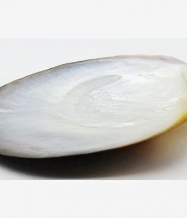 grand coquillage nacre