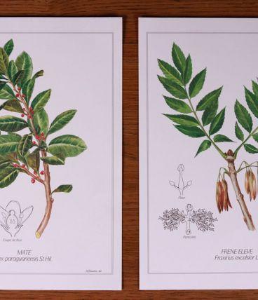 Lot 2 affiches botaniques